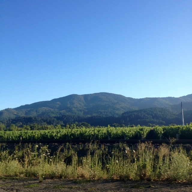 View from the Passenger's Seat, Napa Valley